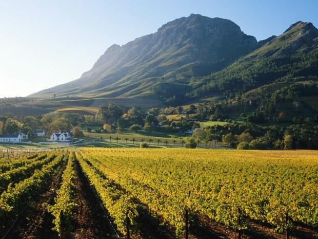 franschhoek-vineyards-south-africa