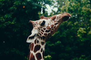 animal-animal-photography-blur-797643