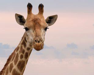 animal-animal-photography-close-up-802112
