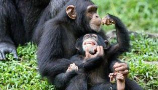 5-day-gorilla-and-lion-safari-in-uganda-tour-2-10534_1510029029