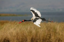 birdwatching-sightseeing-tours-queen-elizabeth-national-park-uganda
