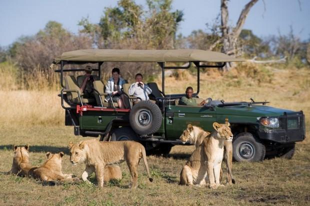 Botswana-Game-Drive1