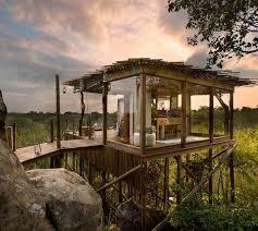 lions sands treehouse