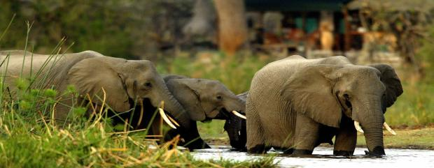 lp-chobe-lodge-safaris