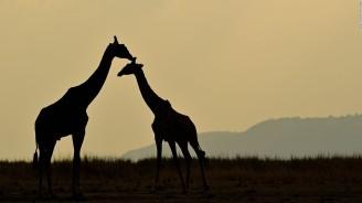 161208105802-03-giraffe-red-list-endangered-full-169