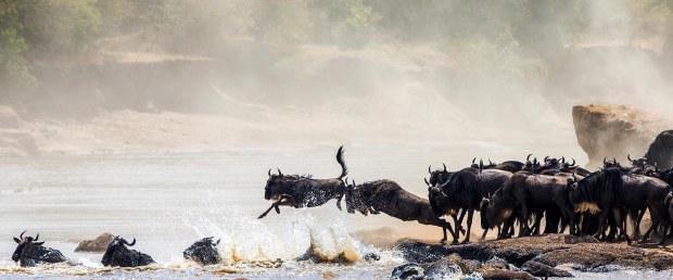 great-wildebeest-migration2