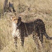 machaba-safaris-experiences-3