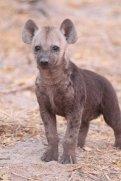 machaba-safaris-guest-sighting-9