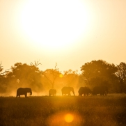 safari-experiences-gallery-1