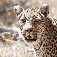 safari-experiences-gallery-10