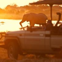 safari-experiences-gallery-11