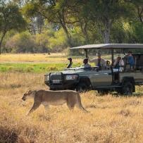 safari-experiences-gallery-2