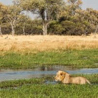 safari-experiences-gallery-5