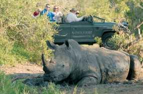 see-the-rhino-at-timbivati