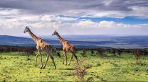 1-day-safari-ngorongoro-crater-tour-2-267087_1510029029