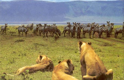1365073908_1-Ngorongoro-Crater