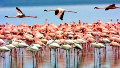 lake-manyara-national-park-235252