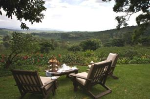 tea-in-the-garden