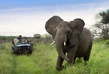 game_drive_-_phinda_forest_lodge