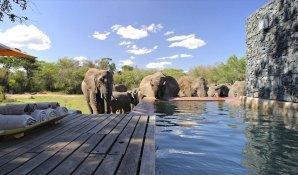 phinda_homestead_elephants_at_pool.850x500