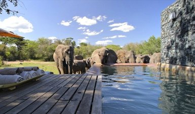 phinda_homestead_elephants_at_pool.850x500