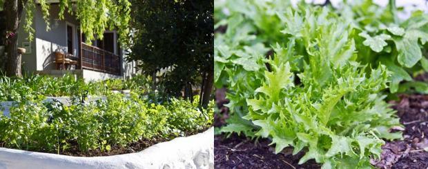 Restaurants-Swellendam-Herb-Garden