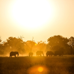 safari-experiences-gallery-1
