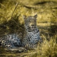 safari-experiences-gallery-4