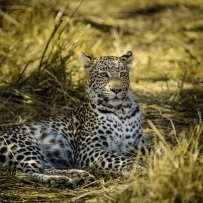 safari-experiences-gallery-4