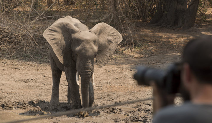 kanga-camp-mana-pools-zimbabwe-african-bush-camps-safari-tented-camp-photo-safaris-with-elephant-3-1-720x420